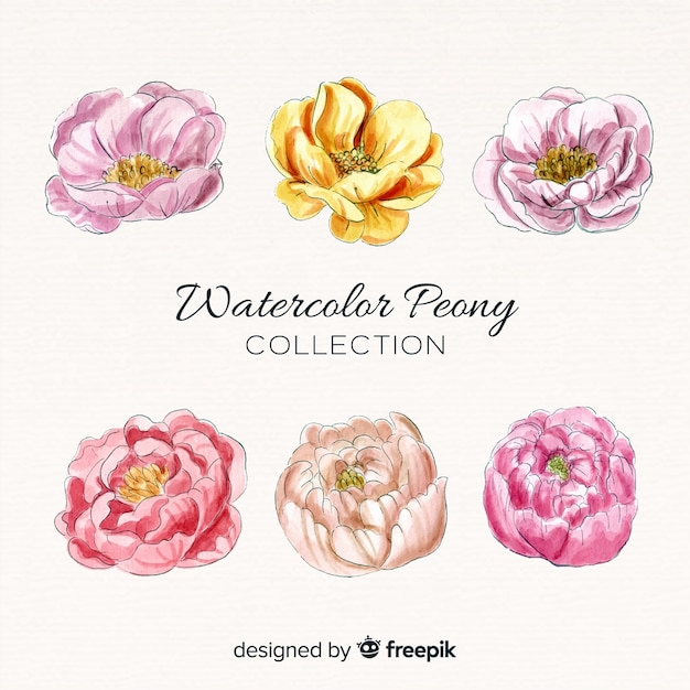 Collection of elegant watercolor peony flowers