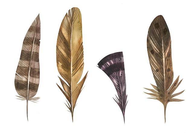 Коллекция перьев этнических птиц рисованной в акварели.