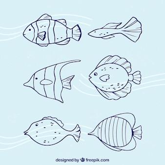 Коллекция рыбы в каракуле