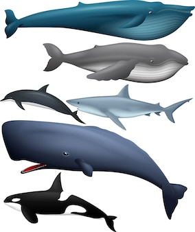 Collection of fishes