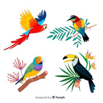 Коллекция плоской экзотической птицы