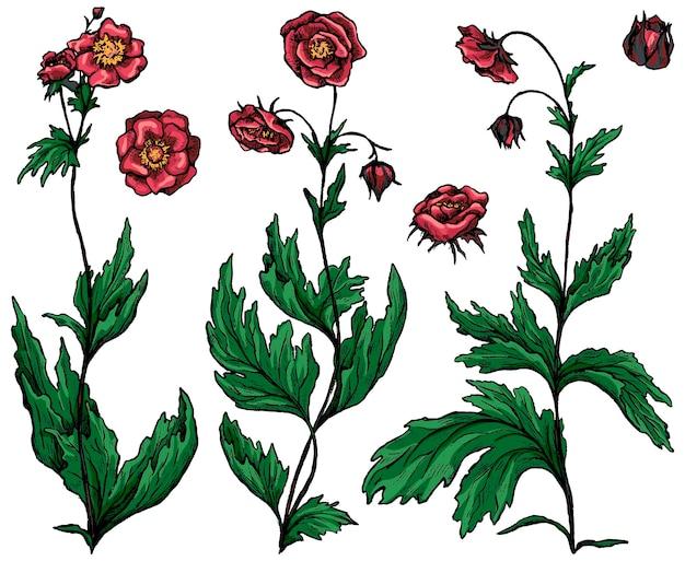 Geumrivale植物のコレクション。野生の花のセットです。白で隔離の植物インクスケッチ。手描きのベクトル図です。デザイン、装飾のための色付きのクリップアート。