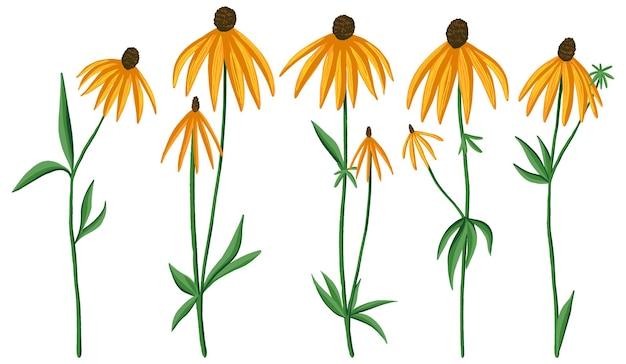灰色の頭のコーンフラワーのコレクション。エキナセア野花のセットです。白で隔離の植物画。手描きのベクトル図です。デザイン、プリント、カード、ステッカー、装飾のための色の要素。