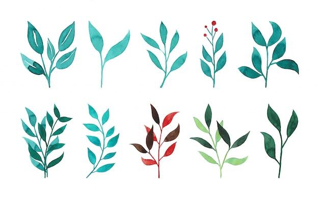 녹색과 붉은 수채화 잎과 brunches의 컬렉션