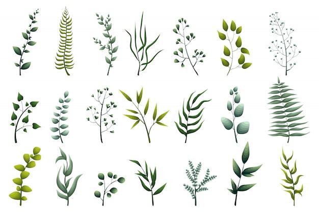 Коллекция зеленых листовых растений, лесных трав, тропических листьев