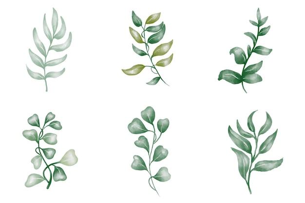 緑の葉植物森林ハーブ熱帯の葉のコレクション水彩風の春の植物