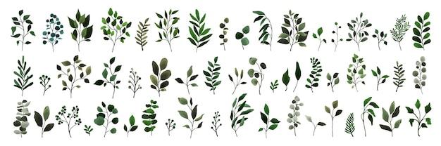 Сбор зелени оставляет ветку веточку растений флоры. цветочные акварельные свадебные объекты, ботаническая листва. вектор элегантная травяная весенняя иллюстрация для приглашения