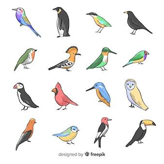 手描きの鳥のコレクション
