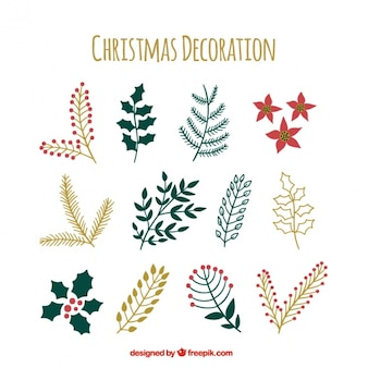 손으로 그린 크리스마스 식물의 컬렉션