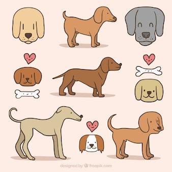 手描き犬と骨のコレクション