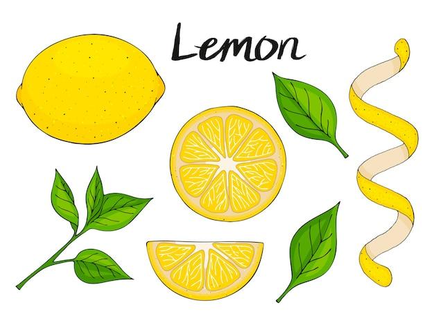 手描きの要素、黄色いレモン、緑の葉とスライスのコレクション。パッケージング、広告用のオブジェクト。孤立した画像。