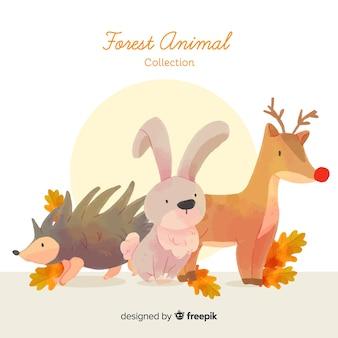 Коллекция рисованной лесных животных