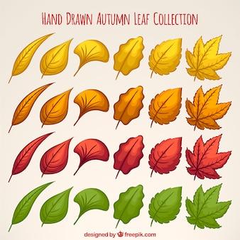Коллекция рисованной листья с разными цветами