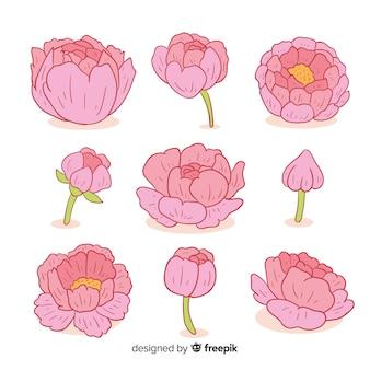 Коллекция рисованных пионных цветов