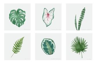 白い背景に描かれた手描きの植物のコレクション