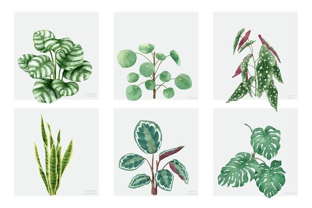 손으로 그린 식물 흰색 배경에 고립의 컬렉션