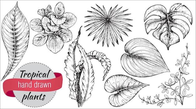 手描きの熱帯の花、ヤシの葉、ジャングルの植物のコレクション。黒と白のエキゾチックな花のイラスト。