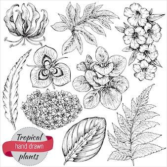 手描きの熱帯の花、ヤシの葉、ジャングルの植物のコレクション。黒と白