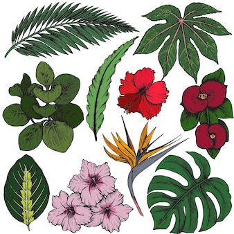 Коллекция рисованной тропических цветов, пальмовых листьев, растений джунглей.