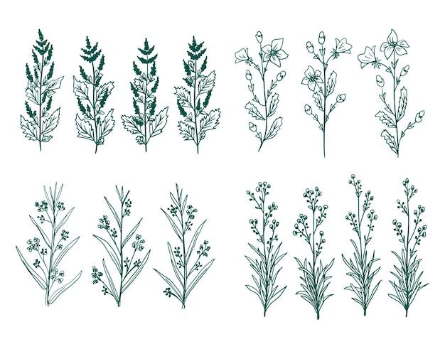 手描きのベクトル緑の装飾的な植物や花の要素の装飾デザインのコレクション