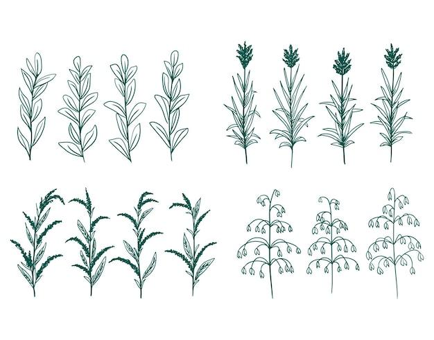 手描きのベクトル緑の装飾的な植物の花と枝の要素のコレクション