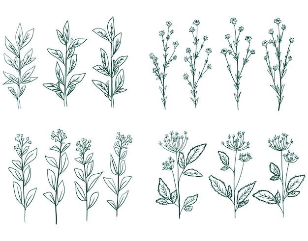 手描きのベクトル緑の装飾的な植物の花や枝のコレクション