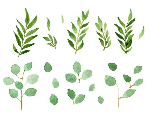 手描きの水彩画の緑の葉のコレクション