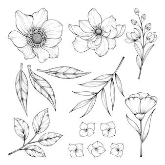 허브와 야생 꽃과 잎 흰색 절연의 컬렉션