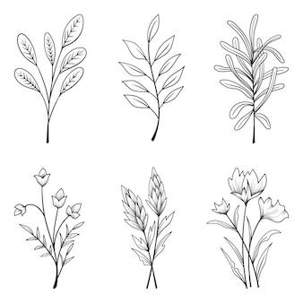 허브와 야생 꽃과 나뭇잎 격리 컬렉션 프리미엄 벡터