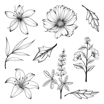 허브와 야생 꽃과 잎 절연의 컬렉션입니다.
