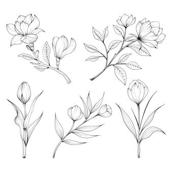 허브와 야생 꽃과 잎의 수집