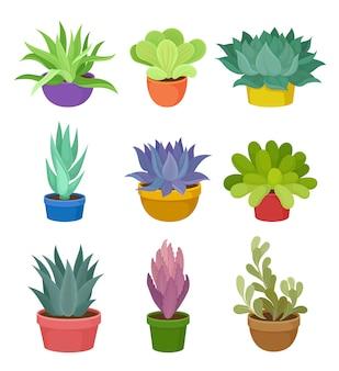 Коллекция комнатных растений в разноцветных горшках.