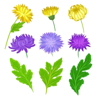 개별 노란색, 보라색 꽃과 나뭇잎의 컬렉션입니다. 흰색 배경에 그림입니다.