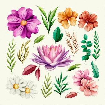 격리 된 꽃과 나뭇잎의 컬렉션