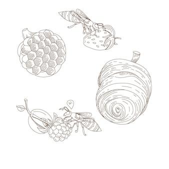 Коллекция больших полосатых ос и осиного гнезда и ягод, изолированные на белом фоне