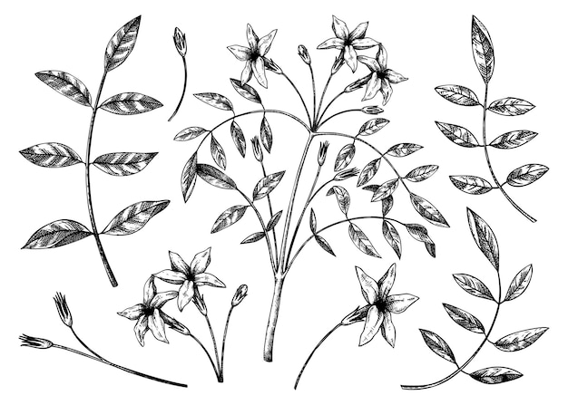 白で隔離の葉と花のコレクション