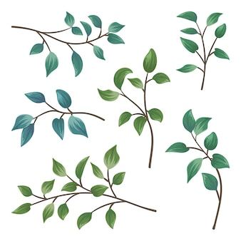 고립 된 나뭇잎 지점의 컬렉션