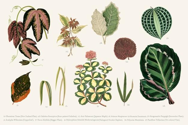 Коллекция листьев