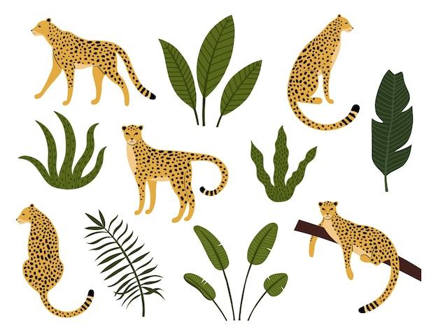 ヒョウ、エキゾチックな葉、熱帯植物のコレクション