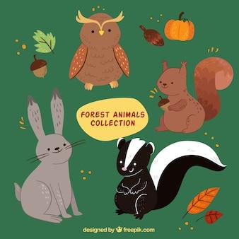 Коллекция прекрасных лесных животных с осенними элементами