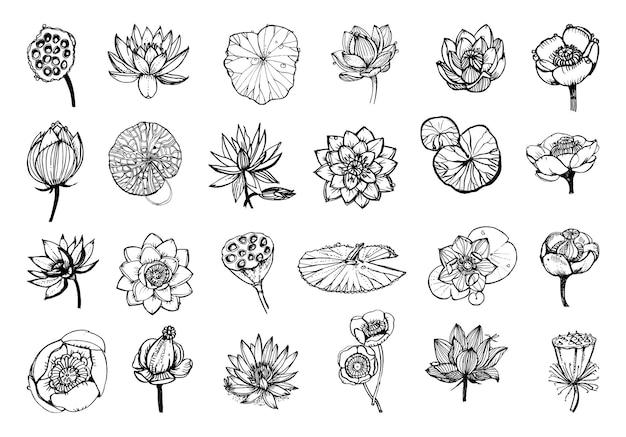 Коллекция монохромных иллюстраций лотоса в стиле эскиза
