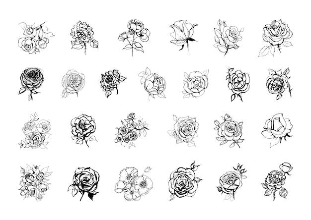 Коллекция монохромных иллюстраций роз в стиле эскиза