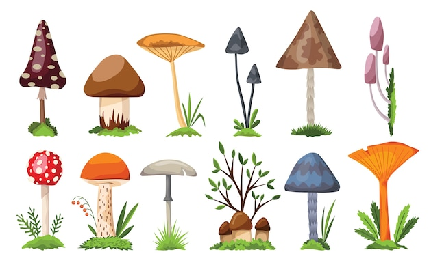 Сбор грибов и поганок. иллюстрация различных видов грибов на белом фоне. красочный лесной дикий набор разных съедобных грибов и поганок.