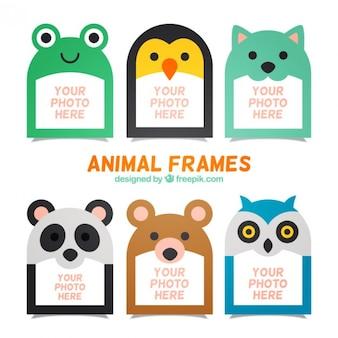 Коллекция животных красивую рамку фото Бесплатные векторы