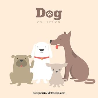 素敵な犬のコレクション
