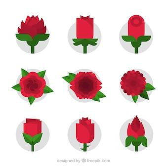 9 개의 편평한 빨간 장미 컬렉션