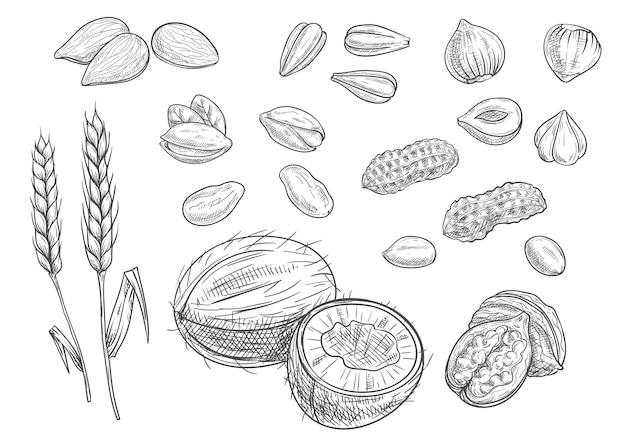 白で隔離されるナッツのコレクション