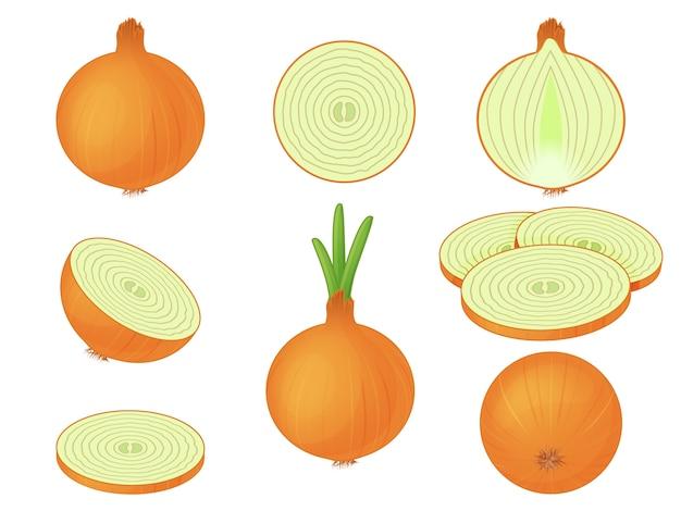 Сбор луков на белом фоне. луковицы под разными углами, срезанные и цельные. овощи. изолированный объект на белом фоне. мультяшный стиль