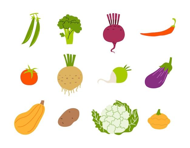 흰색 바탕에 유기농 야채 컬렉션