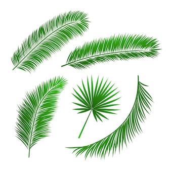 Коллекция листьев пальмы изолированных векторных иллюстраций